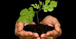 Join Hope's Green Team.  Help turn our church and our planet green! Contact the office to volunteer.